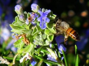 FujiHS10 Test shot Bee